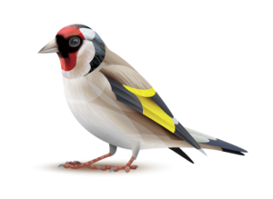 Goldfinch New House Type Barna Co Galway