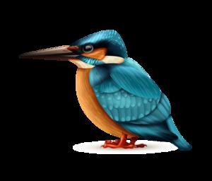 Kingfisher house type